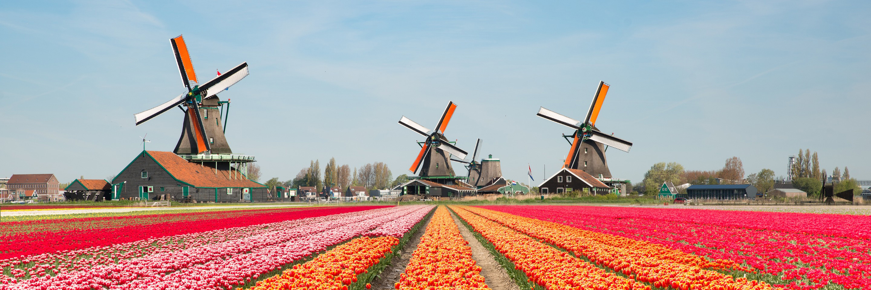 Tulips of Northern Holland for Garden & Nature Lovers