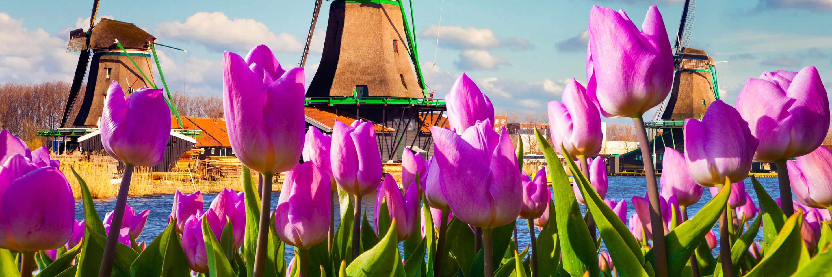 Tulip Time Cruise with 1 Night in Amsterdam for Beer   Enthusiasts