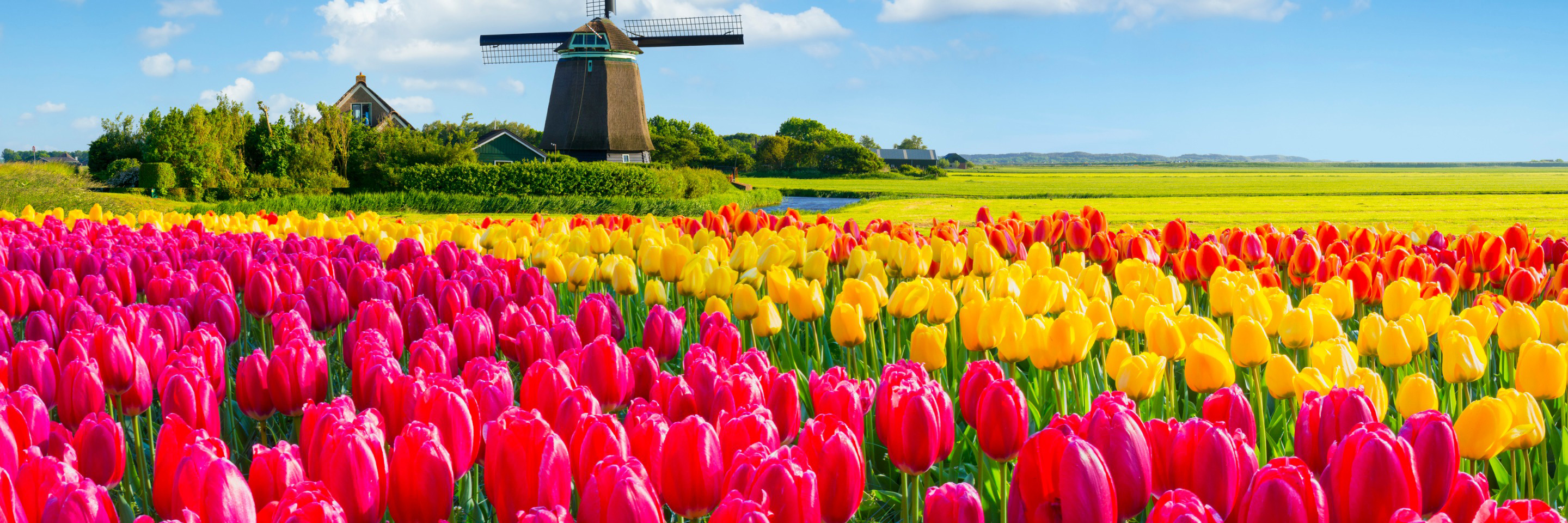 Tulips of Northern Holland with 1 Night in Amsterdam for   Garden & Nature Lovers